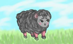 black cute sheep