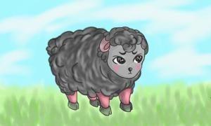 black cute sheep